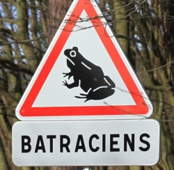 attention-batraciens